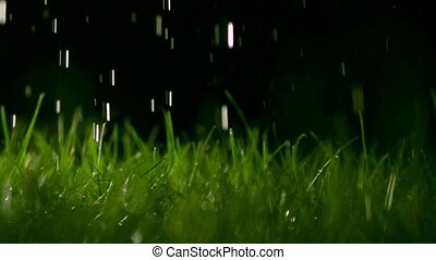 Grass blades and pouring water at night, shallow focus....
