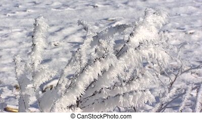 grass blades in ice crystals - cu