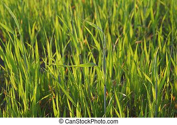 grass blades lit by