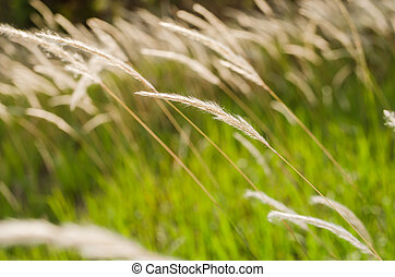 Grass bloom plant in the green nature or in the garden