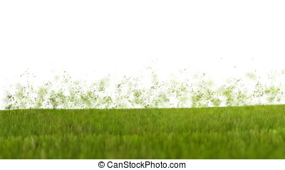 Grass blowing in the wind, particles flying against white