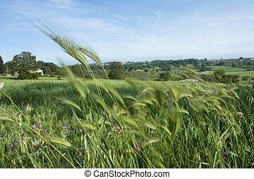 Grass Blurred by Wind