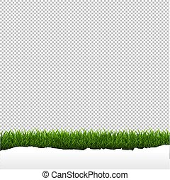 Grass Border Isolated Transparent Background
