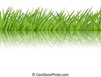 Grass border. Vector.