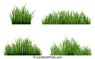 Grass Border With White Background