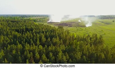 Grass burns in a meadow among forest at summer sunny day. Aerial view