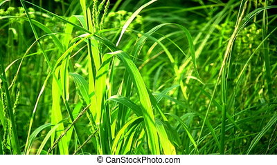 Grass - Close-up of green grass
