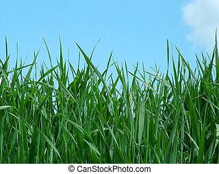 Grass - Close view of grass
