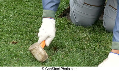 worker tamps a replaced piece of grass with a wooden hammer...