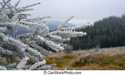 Christmas tree with frost.