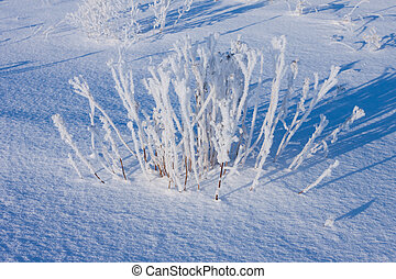 grass covered with hoarfrost in snow