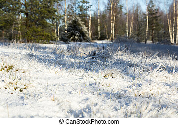 grass covered with snow in the end of November