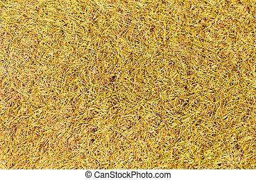 grass detail texture