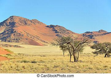 Grass, dune and mountain landscape near Sossusvlei,