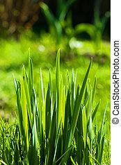 Grass. Eco nature