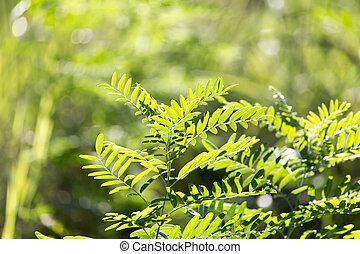 grass fern in nature