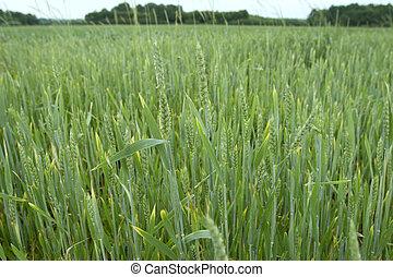 grass field 1
