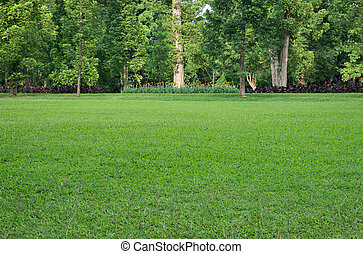 Grass field and trees - Grass field and various trees on...