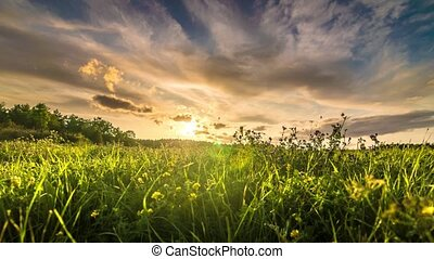 Grass field at sunset time lapse