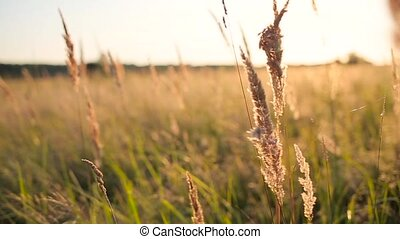 grass field in the sun rays