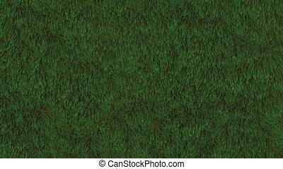 Grass Field Loop - Animation of grassy field. Seamless loop...