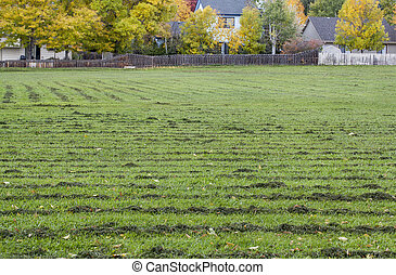 grass field mowed