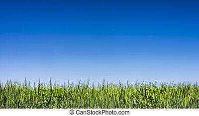 Grass field under a clear blue sky