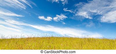 Grass field under blue cloudy sky