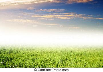 Grass field under blue sky.