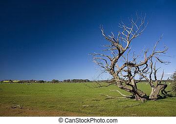 Grass field with bizarre dead tree in Kangaroo Island,...