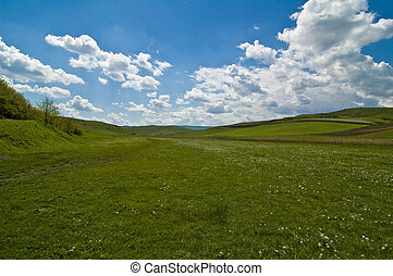 grass field with blue sky and cloud