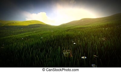 Grass field with rolling hills and wildflowers in Ireland