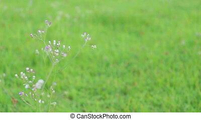 grass flower background