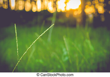 grass flower blooming  spring  nature  background