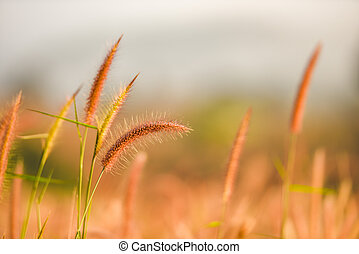 grass flower foggy landscape forest morning beautiful sunrise mist with plant .