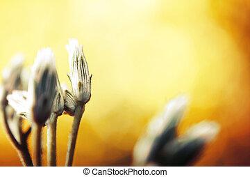 grass flower in green nature light
