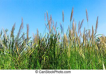 Grass flower with blue sky