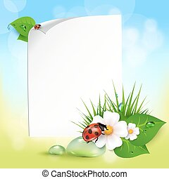 grass, flowers, dew drops, ladybug - Note with leaves, drops...