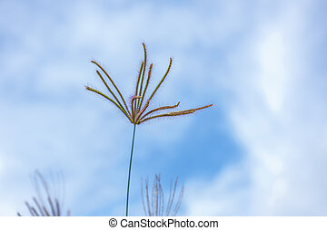 Grass flowers  flora with blue sky background