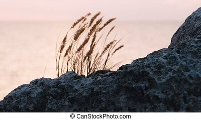 Grass fluttering on wind with rock in focus on foreground,...