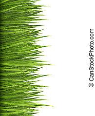 grass., fond, vector., vert, nature