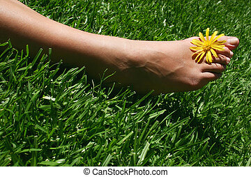 Foot with daisy on grass