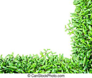 Grass frame over white background