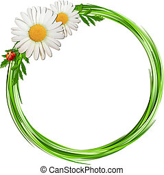 Grass frame with daisy flowers and ladybug .