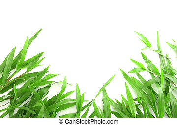 Grass frame with space for text