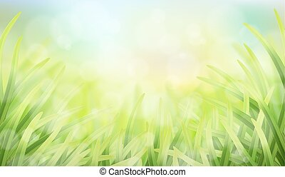 grass glare and effect bokeh - Vector spring background with...