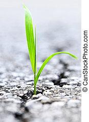 Grass growing from crack in asphalt - Green grass growing...