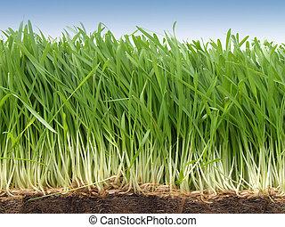 Grass - Growing grass