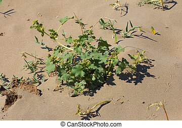 grass growing in the sand
