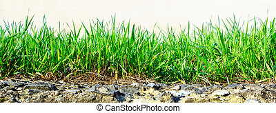 grass growing out of stone - fresh green grass growing out...